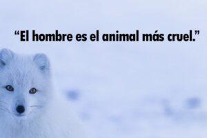 frases de animales bonitas