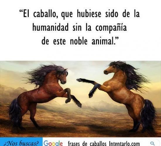 Frases de caballos